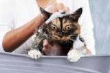 Нужно ли мыть кошку? Как часто можно мыть кота