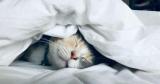 Назван способ заснуть за считанные секунды
