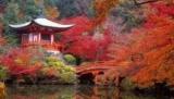 Парады гейш, цветения кленов и сакур: 7 причин, чтобы посетить Японию в ноябре