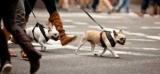 Как гулять с собакой: время, особенности прогулок, важные процедуры до и после, правила выгула собак в общественных местах