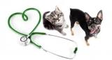 «Дицинон» для кошек: показания, способ применения
