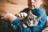 Таурин для кішок — інструкція із застосування, склад, шкода й користь