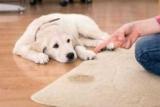 Как избавиться от запаха мочи собак: использование бытовой химии, методов и средств