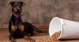 Хороші і недорогі корми для собак: опис, виробники