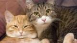 Як подружити двох кішок в одній квартирі? Породи і характери кішок